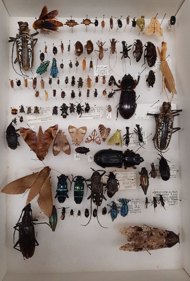 This is another image of the Bohart Museum of Entomology collection that will be gifted to Atatürk University, Turkey. (Bohart Museum photo)