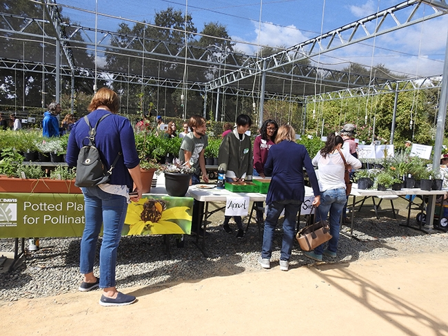 This is a scene from the pre-COVID-19 UC Davis Arboretum Teaching Nursery plant sales. The sales are now online, with curbside pickup. (Photo by Kathy Keatley Garvey)