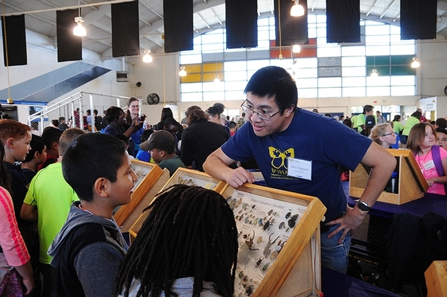 Entomologist Alex Nguyen, a UC Davis alumnus, volunteered at the 2017 Solano County Youth Ag Day held at the Solano County Fairgrounds for third-graders. These are some of the traveling display boxes the Bohart uses. (Photo by Kathy Keatley Garvey)