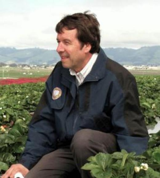 IPM specialist Frank Zalom in a strawberry field. (Photo by John Stumbos)