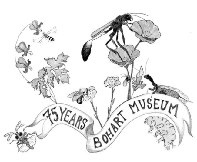 Art work by Christine Melvin, an associate at the Bohart Museum of Entomology. Can you identify the flora and fauna?