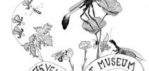 Art work by Christine Melvin, an associate at the Bohart Museum of Entomology. Can you identify the flora and fauna? for Bug Squad Blog