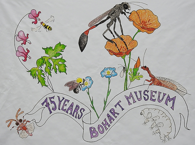 Christine Melvin's art work, transformed into a banner for the Bohart Museum of Entomology's 75th anniversary,  features a hover fly, sphecid wasp, snake fly, bumble bee, aphid, twisted wing parasite and a tardigrade (water bear).