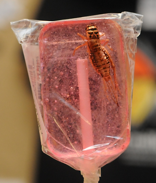 Each lollipop contains a nutritious  cricket. (Photo by Kathy Keatley Garvey)