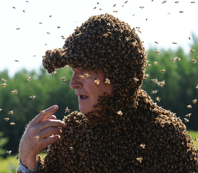 Norm Gary, bee wrangler, loves his bees. (Photo by Kathy Keatley Garvey)