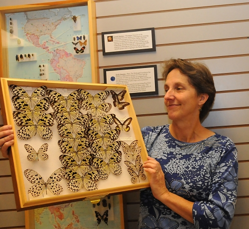 EXOTIC BUTTERFLIES--UC Davis entomologist Lynn Kimsey, director of the Bohart Museum of Entomology and chair of the Department of Entomology, looks over butterflies from southeast Asia. (Photo by Kathy Keatley Garvey)