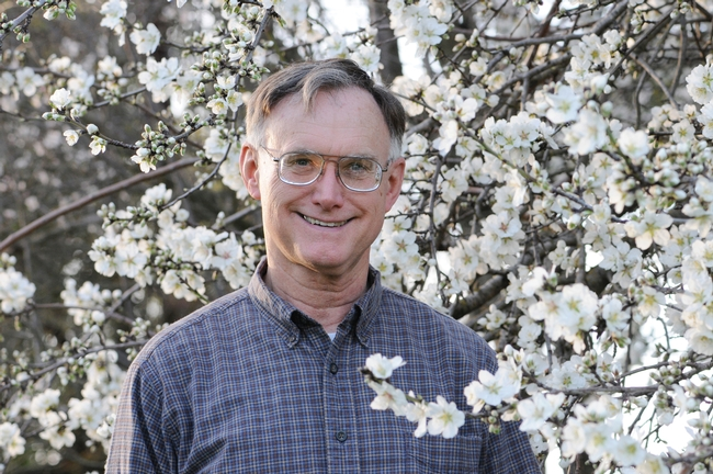 Noted honey bee expert, Extension apiculturist Eric Mussen of UC Davis, by an almond tree in 2011 at the Harry H. Laidlaw Jr. Honey Bee Research Facility at UC Davis. (Photo by Kathy Keatley Garvey)