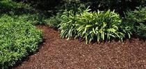 Mulch applied to a garden for winter. for The Backyard Gardener Blog