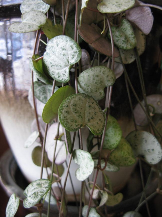 Leaf and stem detail