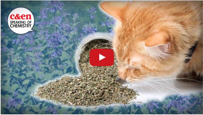catnipvid for The Backyard Gardener Blog