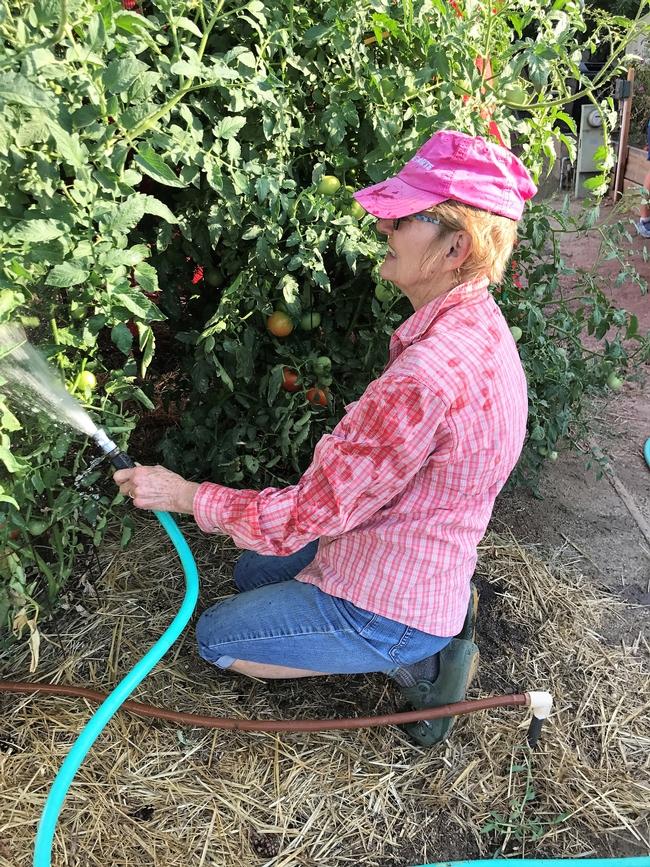 Irrigation for The Backyard Gardener Blog