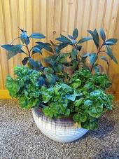 Brazilian Spinach (front), Okinawa Spinach (behind)