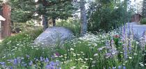 Large patches of the same flower are best. for The Backyard Gardener Blog