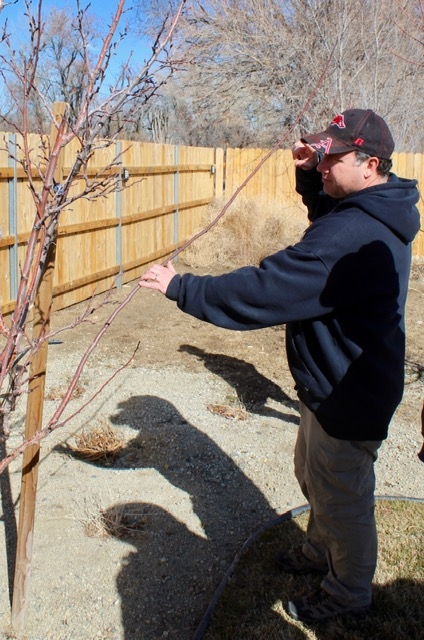 Dustin holding branch out for guiding to 45 degree angle for The Backyard Gardener Blog