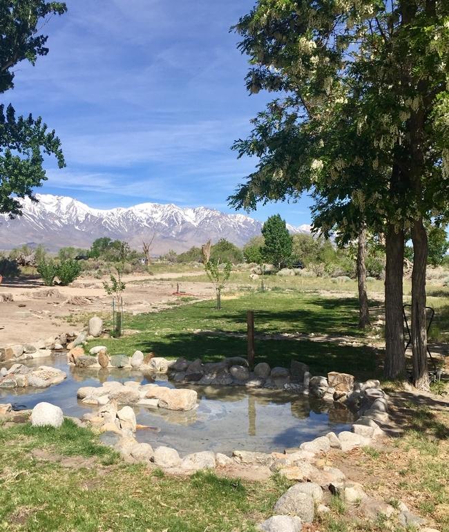 Arai Pond for The Backyard Gardener Blog