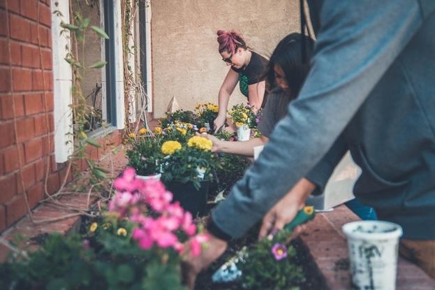 Gardening for The Backyard Gardener Blog