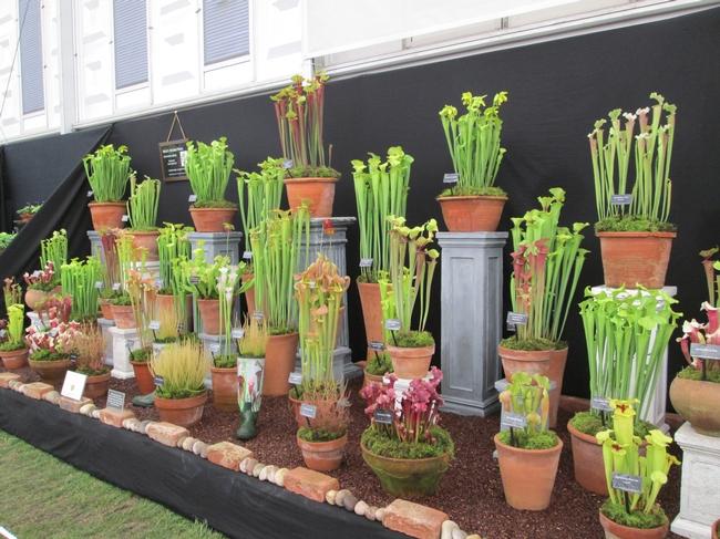 Carnivorous plant display for The Backyard Gardener Blog