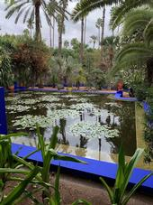 Smaller pond with squares of water lillies near koi pond