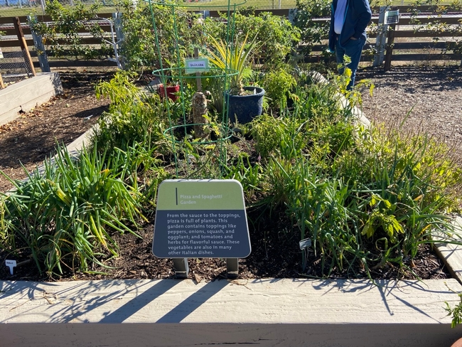 Spaghetti Garden for The Backyard Gardener Blog