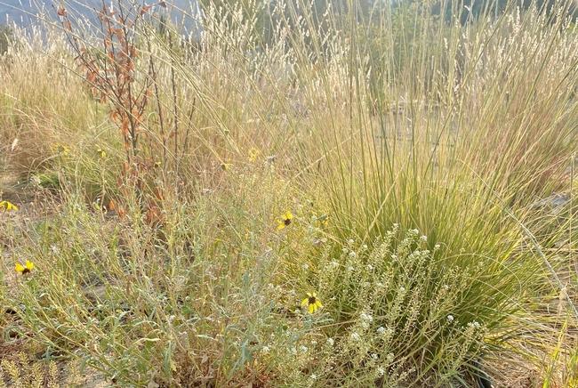 Mixed grasses