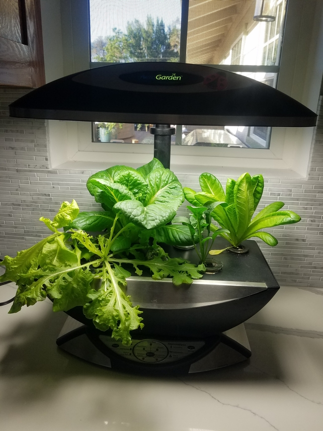 Small hydropoic system suitable for micro greens