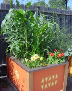 vegetable gardening in a raised bed