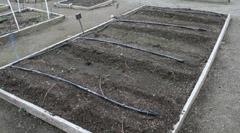 water veg garden