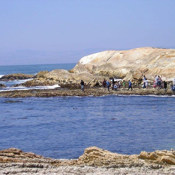 Camp Ocean Pines Naturalists