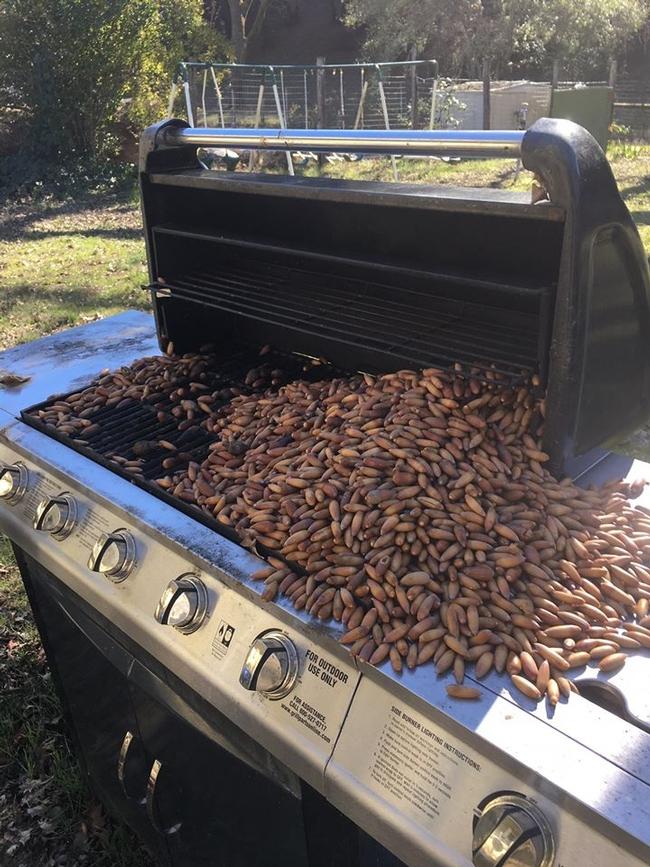 BBQ Acorns