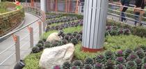 IMG 0130 for A Garden Runs Through It - UCCE Master Gardeners of Colusa County Blog