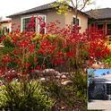 Before and after image of a low-water-use landscape. Photos by Environs Landscape Architecture.