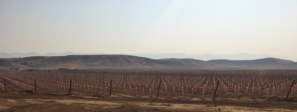 A new vineyard in the Cuyama groundwater basin. Photo by Casey Walsh.