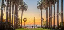 Santa Barbara's iconic palm trees. Photo by Alex Beattie. for The Confluence Blog
