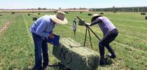 DREC staff, Juan Buenrostro (left) and Efrain Sambrano (right) measuring alfalfa yields. for DREC Blog