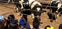 Students visiting the feedlot during a school field trip for DREC Blog