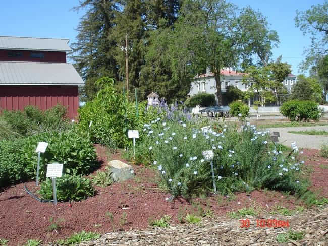 Native Plant Garden in bloom