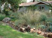Front Yard with Native Plants by Eve Werner