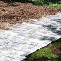 Sheet Mulching Remove Lawn