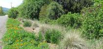 Hedgerow, Xerces Society for The Real Dirt Blog Blog