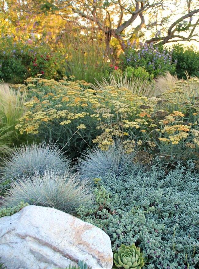Drought tolerant garden, Eve Werner