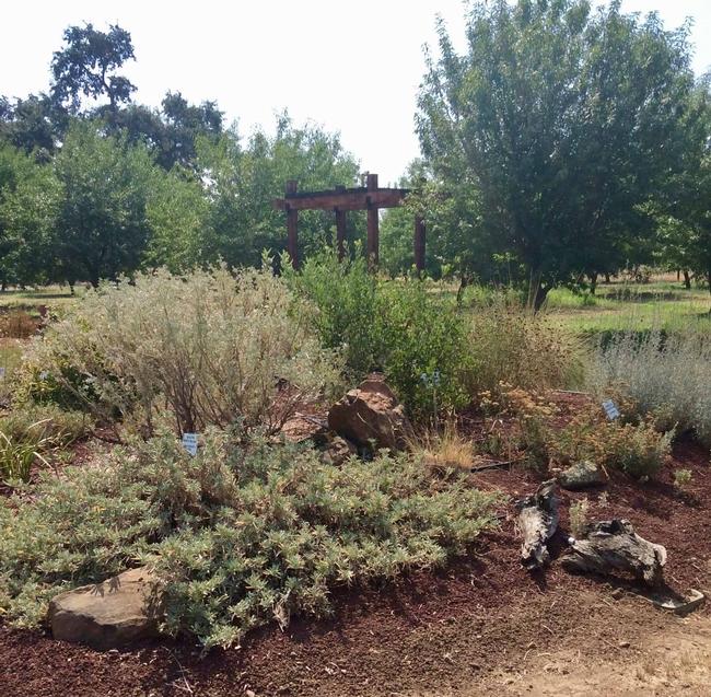CA Native Plant Garden by A. Springer