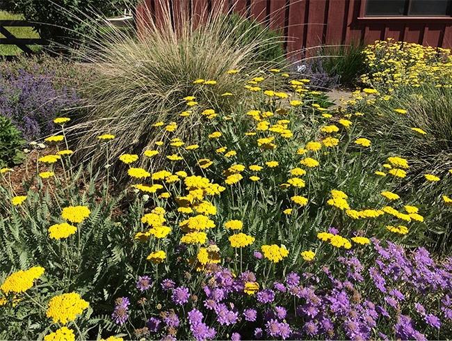 Blooming All-Stars plants, L. Kling