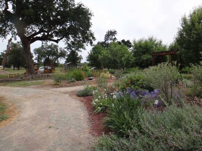 Native Plant Garden, B McGhie