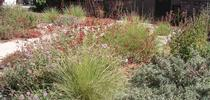 Colorful perennials and shrubs by Cindy Weiner for The Real Dirt Blog Blog
