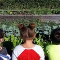 Kids watching the plants grow by Karina Hathorn