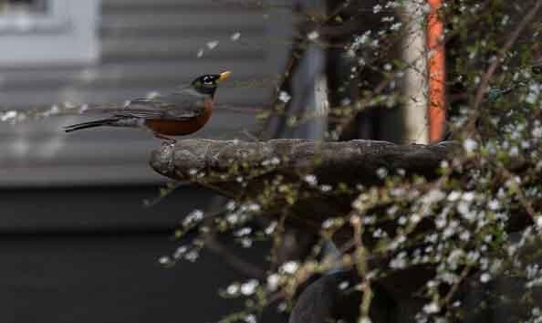 Bird Bath by Lori Harrington
