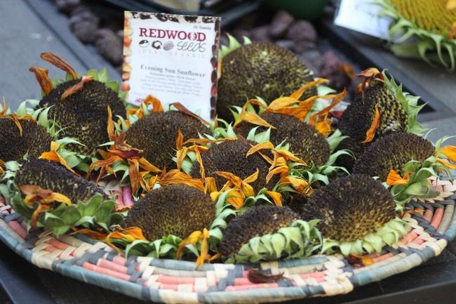 Sunflower seeds, Jennifer Petersen