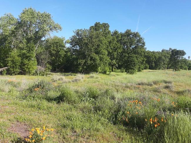 Verbena Fields oak vista, Laura Lukes