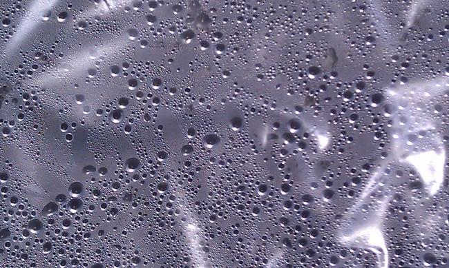 Condensation under the plastic, J. Alosi