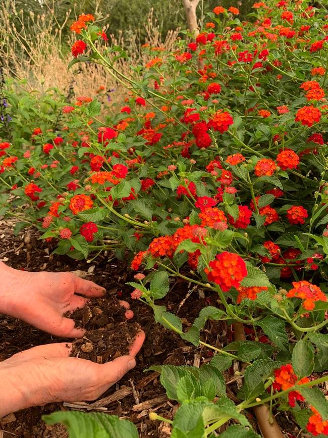 Hands in the soil, John Ober